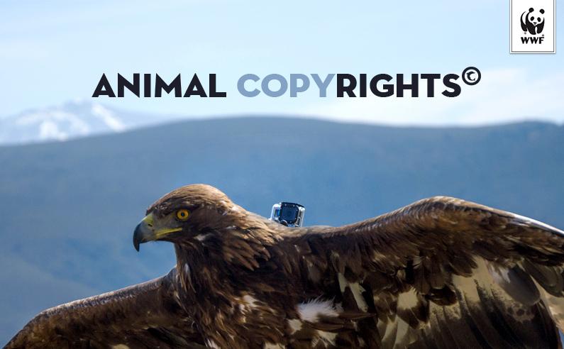 Animal Copyright